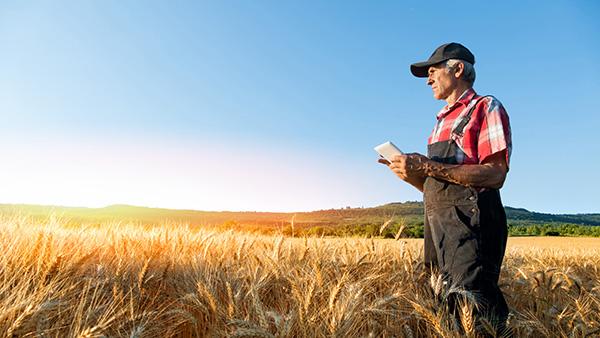 Agricultor en el campo con tablet