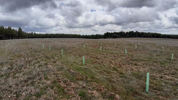 Telefónica contribuye a reforestar un bosque en Palencia junto a BMC Software