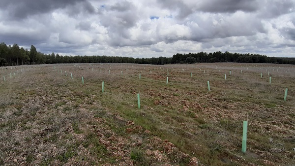 Telefónica contribuye a reforestar ...