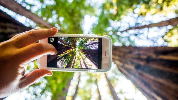 Smartphone in the forest